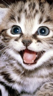 Kitten Wallpapers - screenshot thumbnail