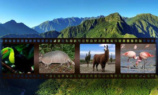 南米の動物