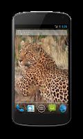 Screenshot of Leopard Free Video Wallpaper