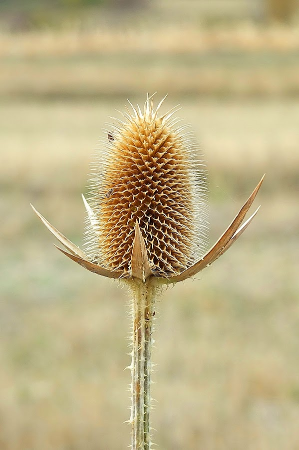 by Maja  Marjanovic - Nature Up Close Other plants ( nature, plants,  )