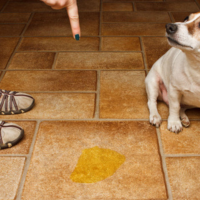 Why does my dog eat poop and how can I make him stop?