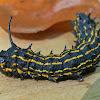 Yellow Striped Oakworm