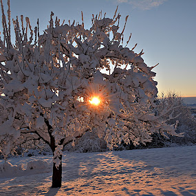 Jutarnje zrake  by Jelena Puškarić - Landscapes Sunsets & Sunrises ( Earth, Light, Landscapes, Views,  )