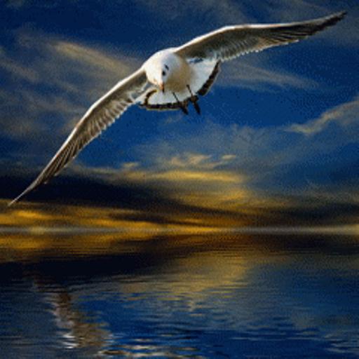 Анимация картинки о чайках, утро солнце окно