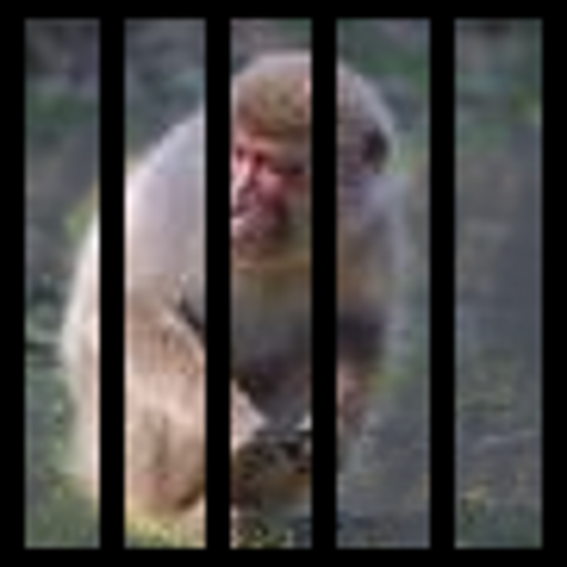 Monkey Hunt