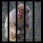 抓猴子 icon
