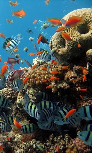 Aquarium HD LWP