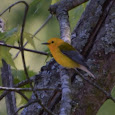 Birds of Alabama