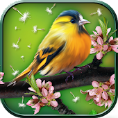 3D Birds Live Wallpaper
