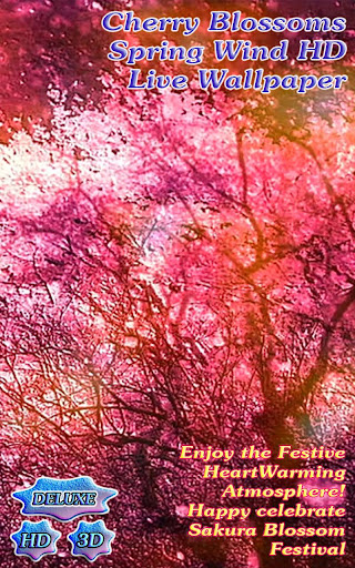 Cherry Blossoms Spring Wind HD