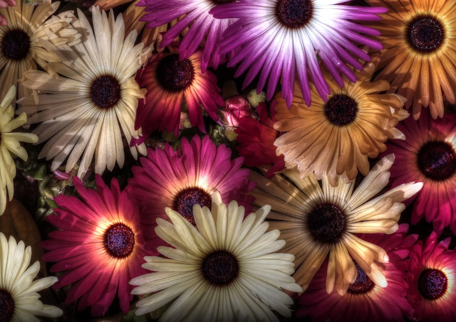 sensor full of flowers by Mark Thompson - Flowers Flowers in the Wild ( orange, purple, petals, colors, flowers, cream,  )
