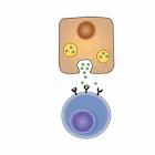 Biochemistry Lippincott's Q&A icon