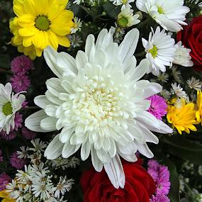 white flower by Assaifi Fajarmass - Flowers Flower Arangements ( white flower, white, nature up close, flowers )