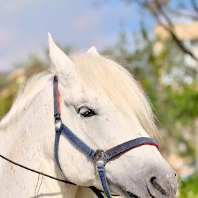 by Явор Янев - Animals Horses