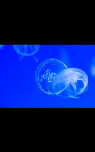 My Photo Wall Jelly Fish LWP
