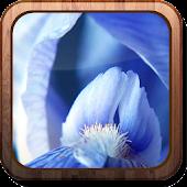 Irises HD Live wallpaper