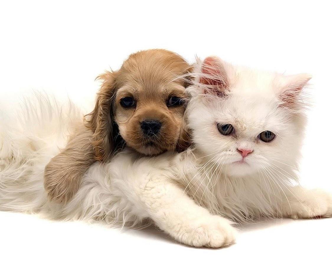 Puppy and Kitten Wallpapers- screenshot