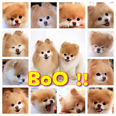 BoO !!  Wallpaper