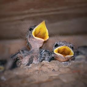 Brand New by Sue Delia - Animals Birds ( baby sparrows, baby birds, birds, sparrow,  )