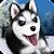 Talking Husky file APK Free for PC, smart TV Download