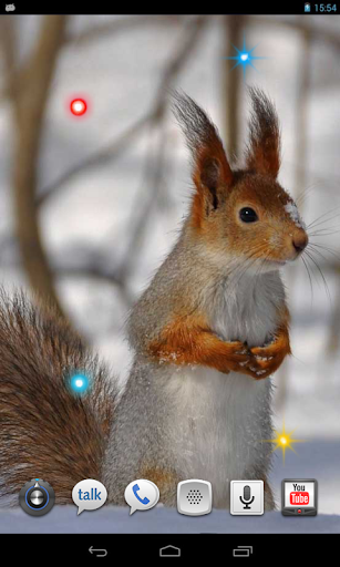 玩個人化App|Squirrel Jokes live wallpaper免費|APP試玩