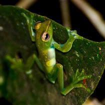 Amphibians of the World