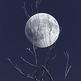 Dead Tree with Moon 2 by Joseph Vittek - Landscapes Starscapes ( moon, tree, blue, white, dead, black,  )
