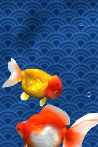 金魚 Gold Fish 3D free ライブ壁紙