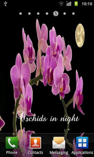 蘭花在夜間III