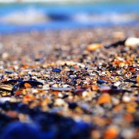 Black Sea shells by Suciu Corina - Nature Up Close Sand (  )