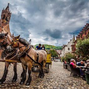 Horses of Freiburg by Jesús Sánchez Ibáñez - City,  Street & Park  Street Scenes ( horses, freiburg, munster )