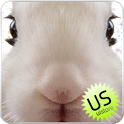 Rabbit LiveWallpaper icon