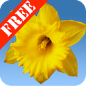 Daffodils Free Live Wallpaper icon