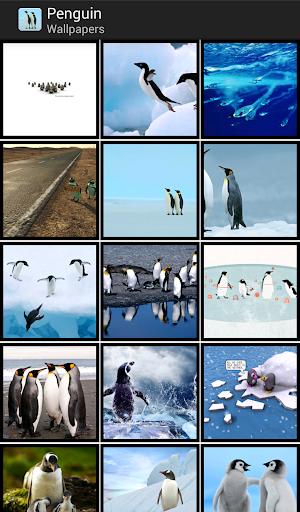 Penguin - HD Wallpapers