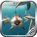 Dolphins Video Live Wallpaper icon