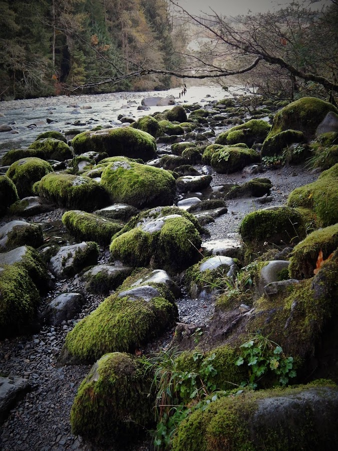 riverbeds  by Lavonne Ripley - Nature Up Close Rock & Stone