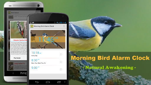 Bird Quiz Alarm Clock Premium