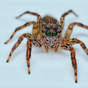 by Ahmad Zaini - Animals Insects & Spiders (  )