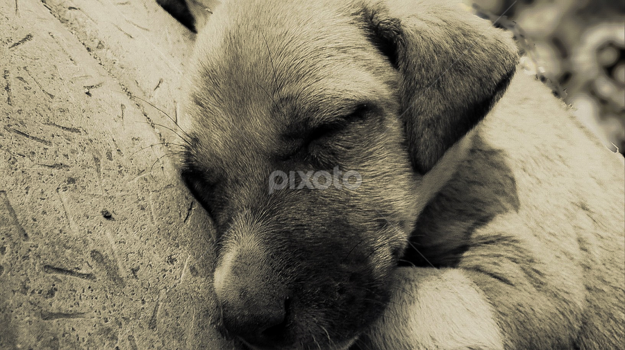 Puppy by Siddharth Nandi - Instagram & Mobile Other ( dream, puppy, sleeping, dog, cute,  )
