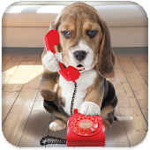 Puppy Call