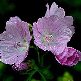 stilte  by Kathelijn Vlaemynck - Flowers Flowers in the Wild