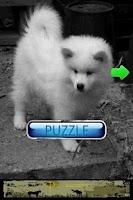 Screenshot of Dog Puzzle: American Eskimo Do