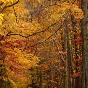 Autumn Bliss by Annette Long-Soller - Landscapes Forests ( autumn, path, nature up close, forest, leaves, landscape )