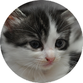 I Love Kittens Widget