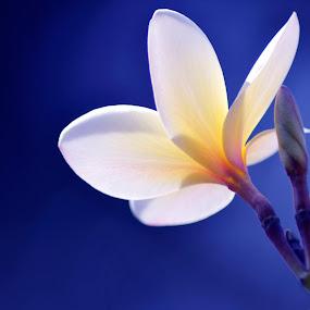 by B Thottoli - Nature Up Close Flowers - 2011-2013