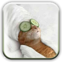 Funny pics collection icon