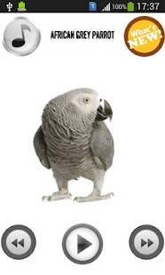 Parrot Sounds & Ringtones - screenshot thumbnail