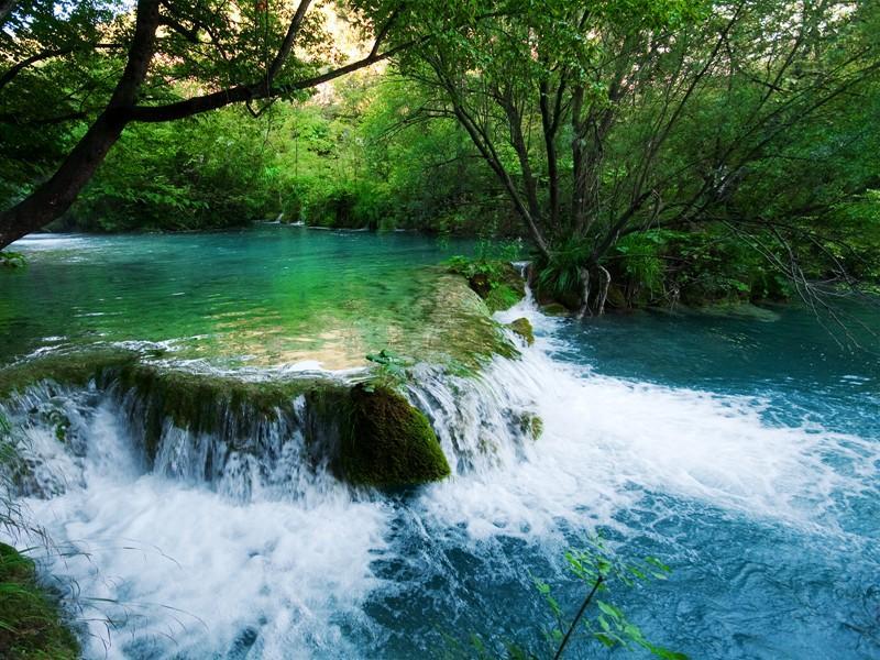 Green Nature HD Wallpaper Screenshot