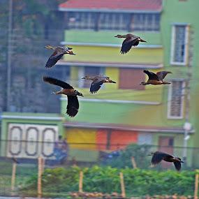 Bird by Abhishek Ghosh - Animals Birds