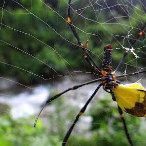 Food Chain by Pritam Saha - Animals Insects & Spiders ( colour, butterfly, spider, pheonix, animal,  )